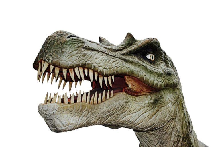 Poznaj życie prehistorycznych stworzeń w Parku Dinozaurów