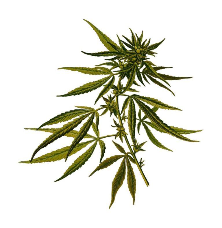 Funkcjonalny box do upraw marihuany